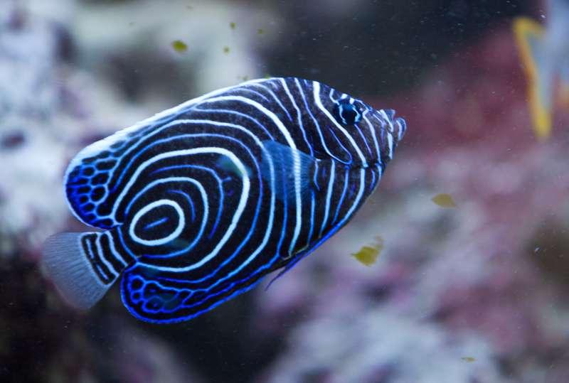 Ons zoutwater Aquarium (Zeewater Aquarium) kijkje waard    u2022 Bokt nl